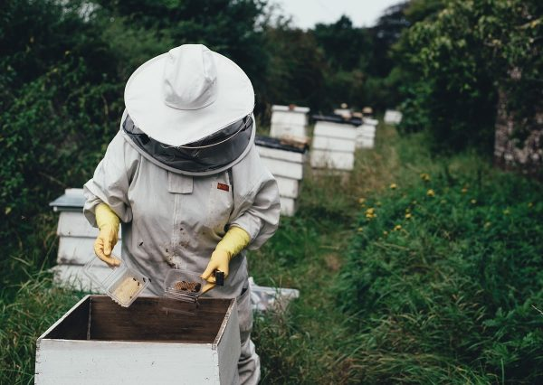 apiary-1866740_1280-min
